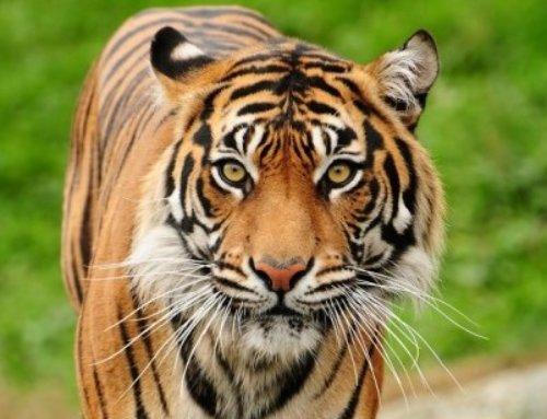 Welke tijgers moet jij nog overwinnen?